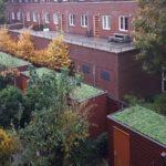 Groene schuurdaken Bergsingel: ieder schuurtje verdient een groen dak